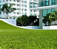 Sod & Synthetic Grass